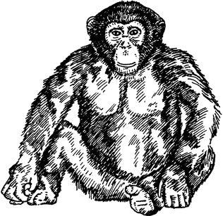 Crafty Stamps - Chimpanzee - AN117D
