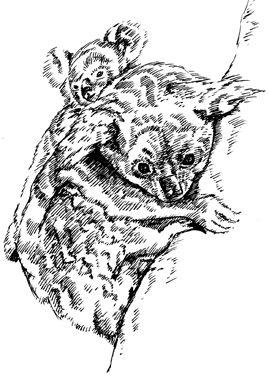Crafty Stamps - Koalas - AN124HF