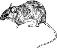 Crafty Stamps - Mouse - AN127D