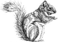 Crafty Stamps - Squirrel - AN132HF