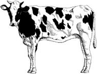 Crafty Stamps - Cow - AN158M
