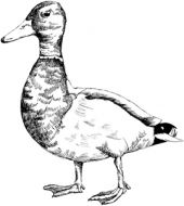 Crafty Stamps - Duck - AN159F