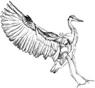 Crafty Stamps - Heron - AN164Q
