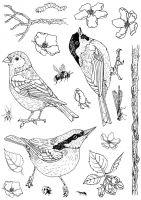 Birds Bugs and Blossoms Hobby Art Stamp Set (CS205D)