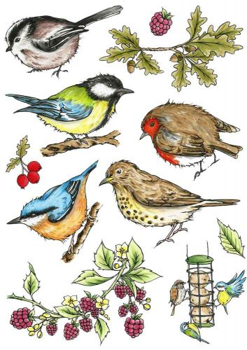 Birds of the Hedgerow A5 Clear Stamp Stamp Set by Hobby Art (CS301D)