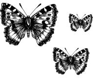 Crafty Stamps - Butterfly Set 1 - AN144K