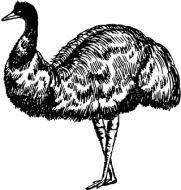 Crafty Stamps - Emu - AN149F