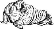 Crafty Stamps - Walrus - AN156B