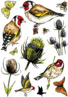 Goldfinch & Teasels A5 Clear Stamp Stamp Set by Hobby Art (CS307D)