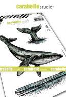 Carabelle Studio - Cling Stamp A6 - Le chant des baleines by Alexi (SA60494)