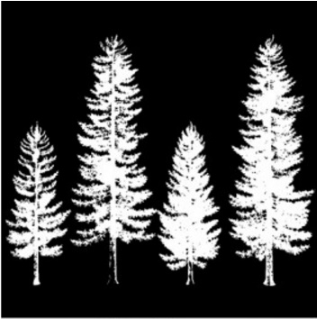 Image result for imagination crafts pine trees art stamp